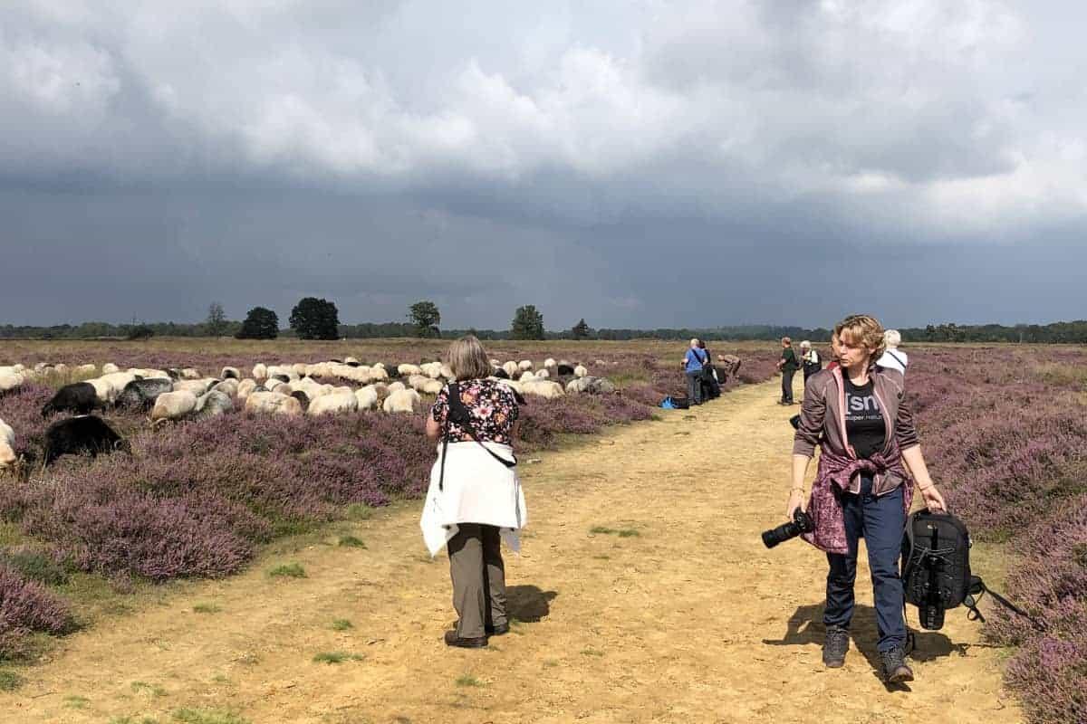 Deelnemers fotograferen schapen tijdens fotoweekend Drenthe