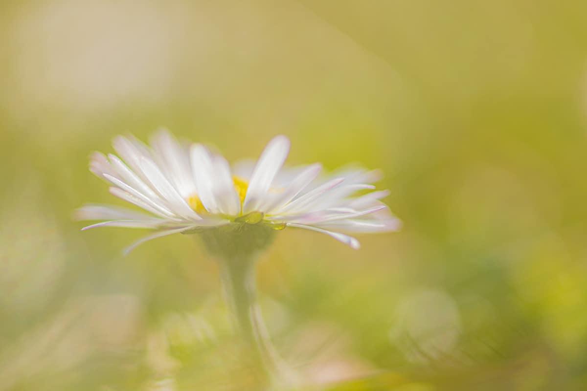 Helemaal gratis ons e-book 'Voorjaarsbloemen fotograferen' Download nu!