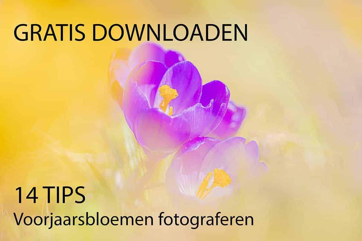 Fotografie tips e-book Voorjaarsbloemen fotograferen