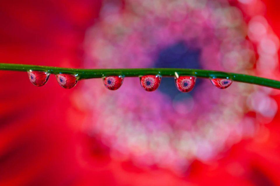 Fotografie tips waterdruppel fotograferen
