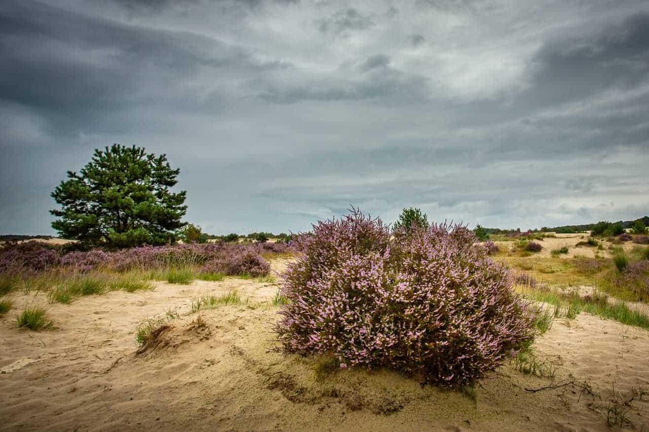 Prachtig landschap tijdens fotografie weekend Brabant