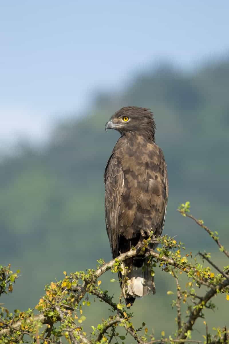 Fotoreis Afrika Mkomazi National Park Tanzania