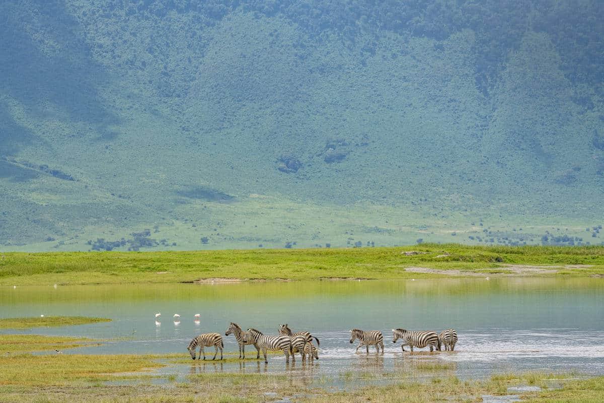Fotoreis Afrika Zebra's in Ngorongoro Crater Tanzania