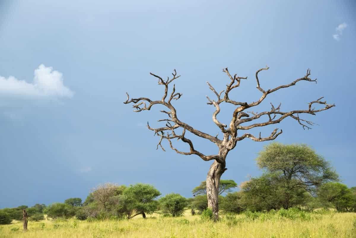 Fotoreis Afrika Ngorongoro Mto wa Mbu