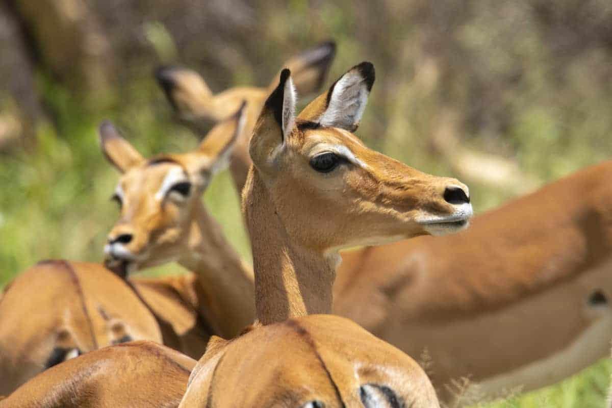 Wildlife fotoreizen Africa