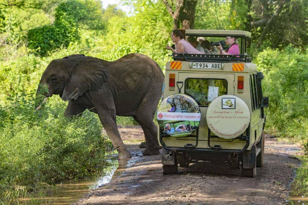 Olifant bij de auto met Fotografie-reizen op de achterkant Afrika