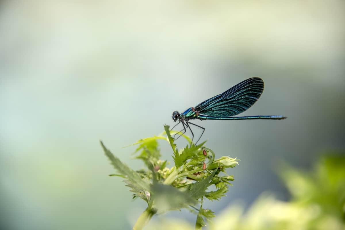 Fotoreis Albanie The Blue Eye