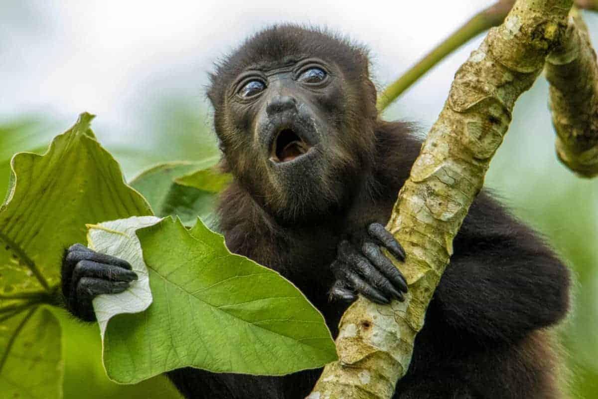 Brilaanp tijdens de fotografiereis Costa Rica