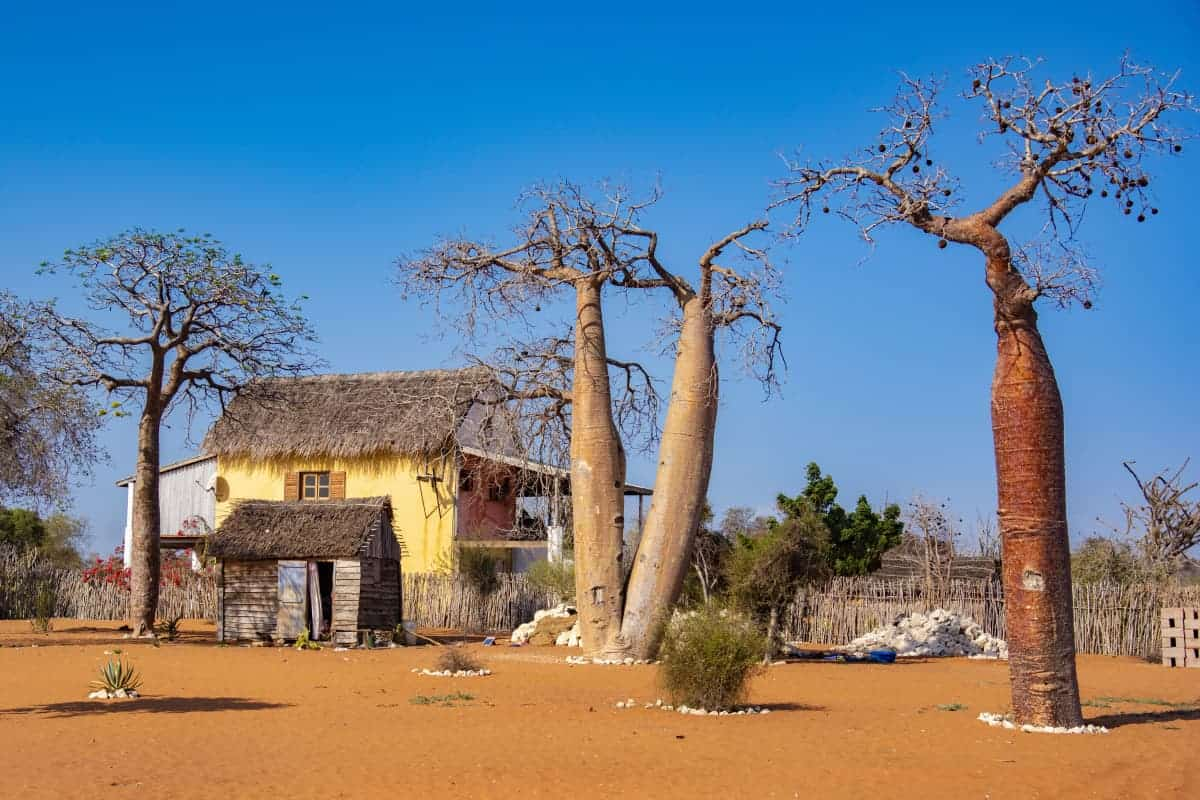 Fotoreis Madagaskar Spiny Forest huis met baobabs
