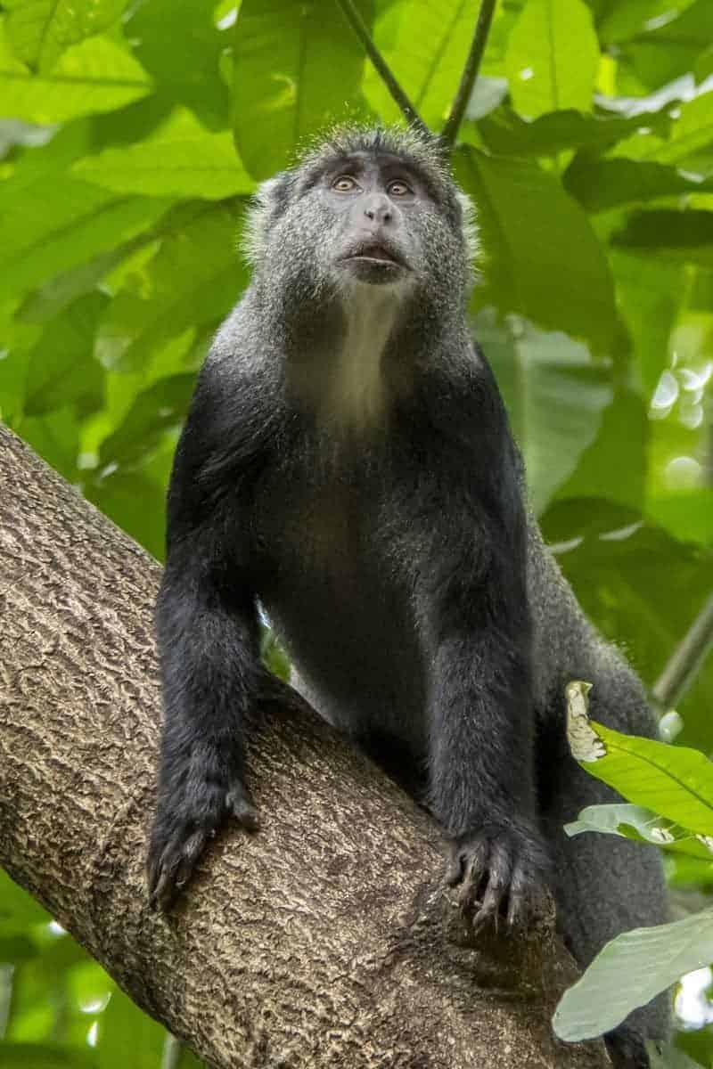 Fotoreis Tanzania - Aapje in een boom