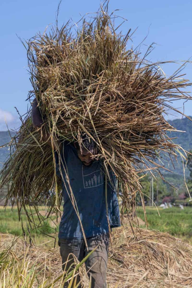 Fotoreis Tanzania - Man met stro op zijn hoofd