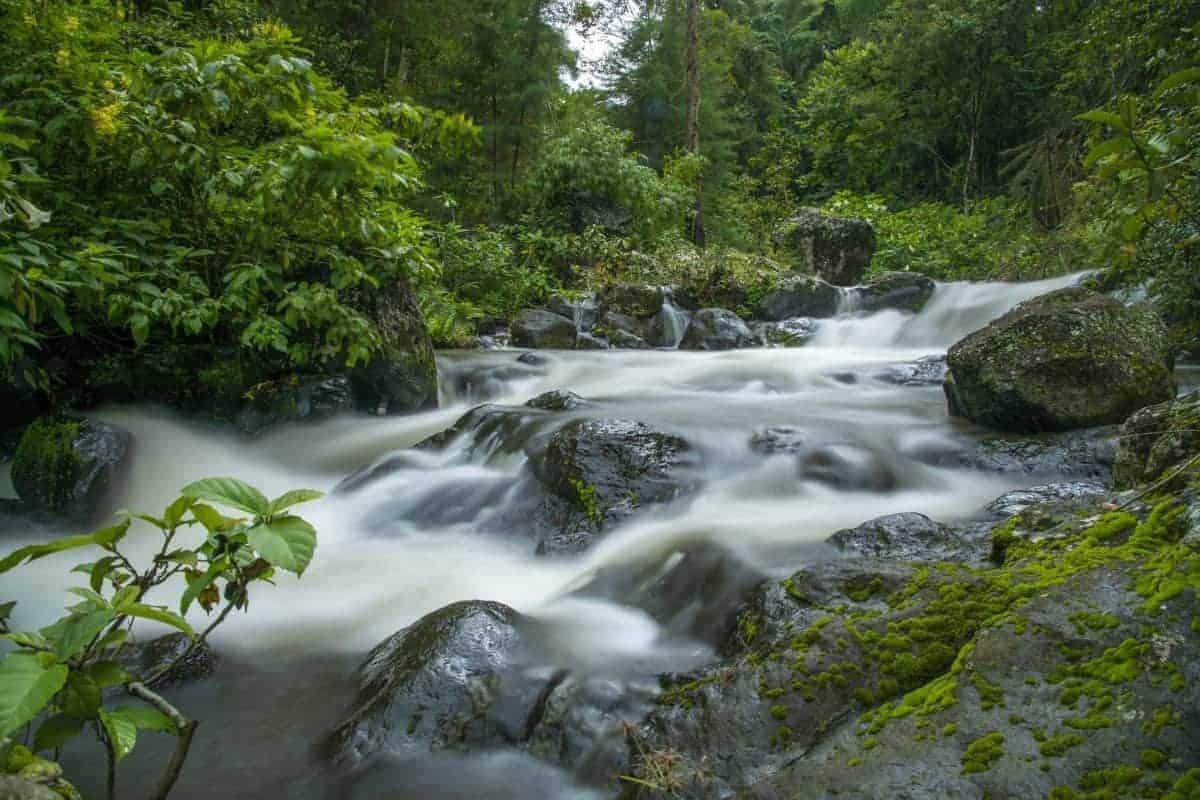 Fotoreis Tanzania - Regenwoud met lange sluitertijd