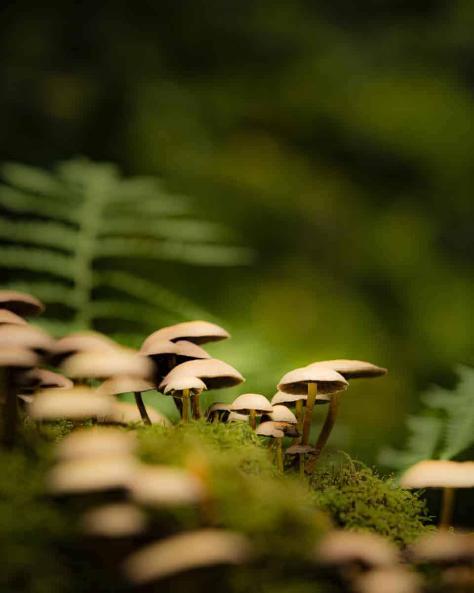 Fotoweekend Veluwe met paddenstoelen