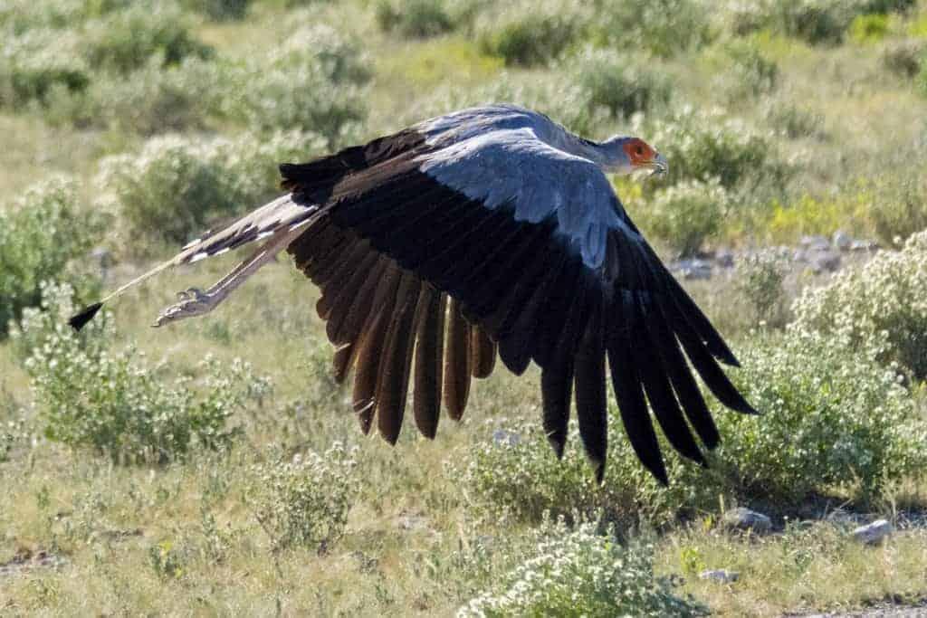 Fotoreizen Afrika Secretary Bird