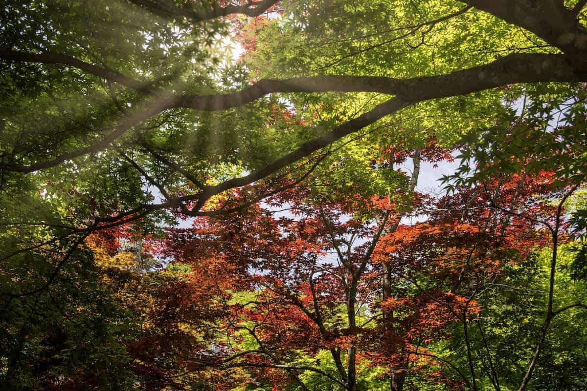 Fotoreizen Japan Miyajima 02