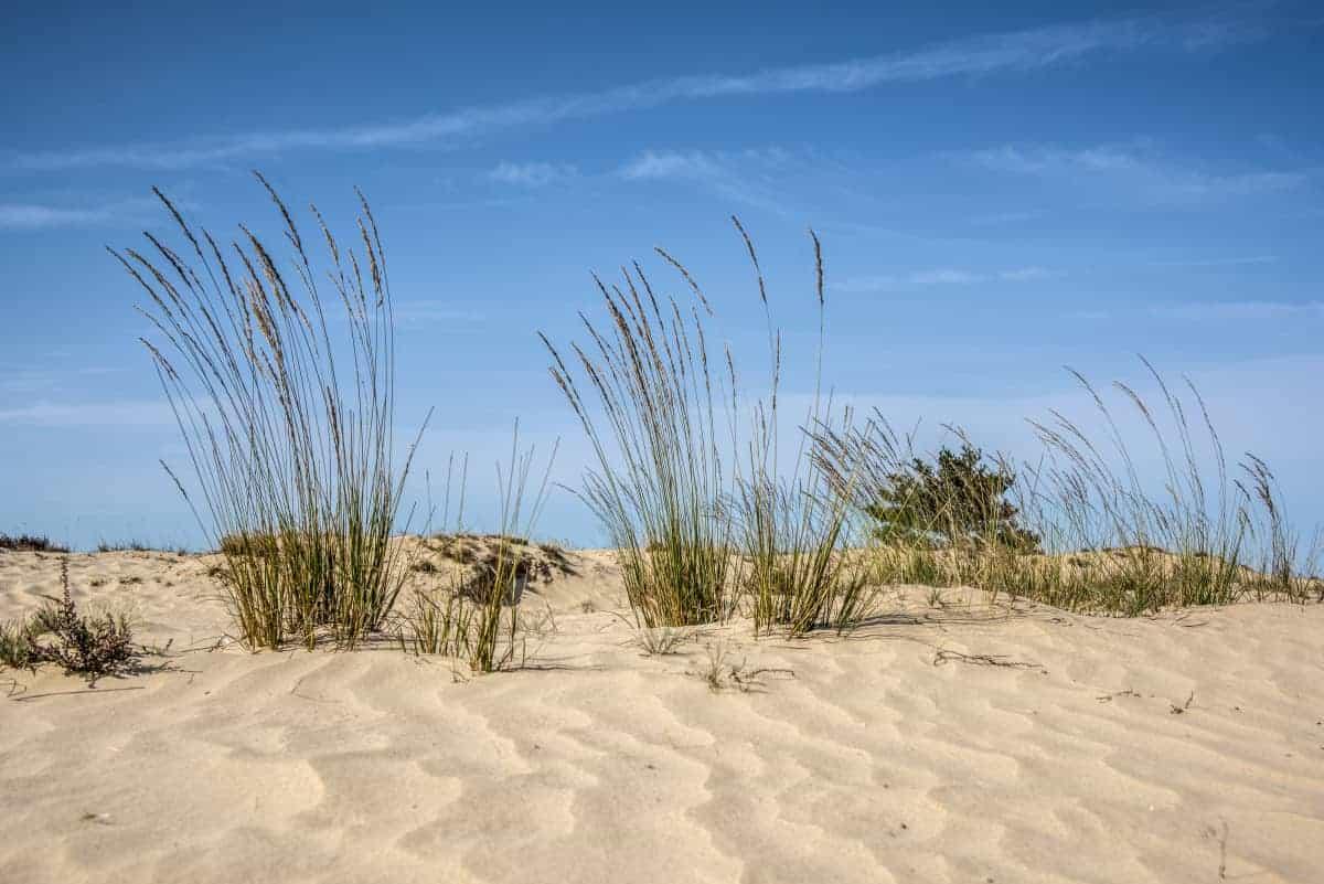 Fotoweekend Brabant Drunense Duinen