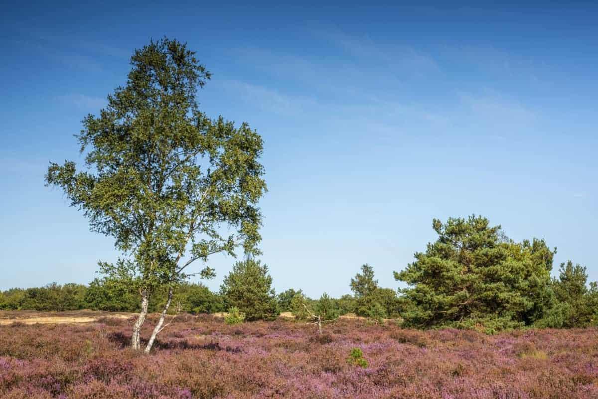 Fotoweekend Brabant heidegebied