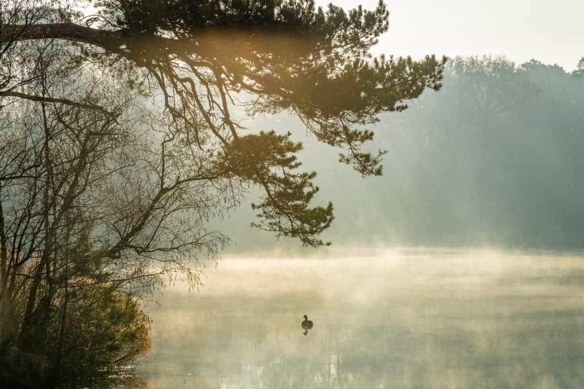 Eend in ochtendmist Van Esschenven tijdens Fotoweekend Brabant