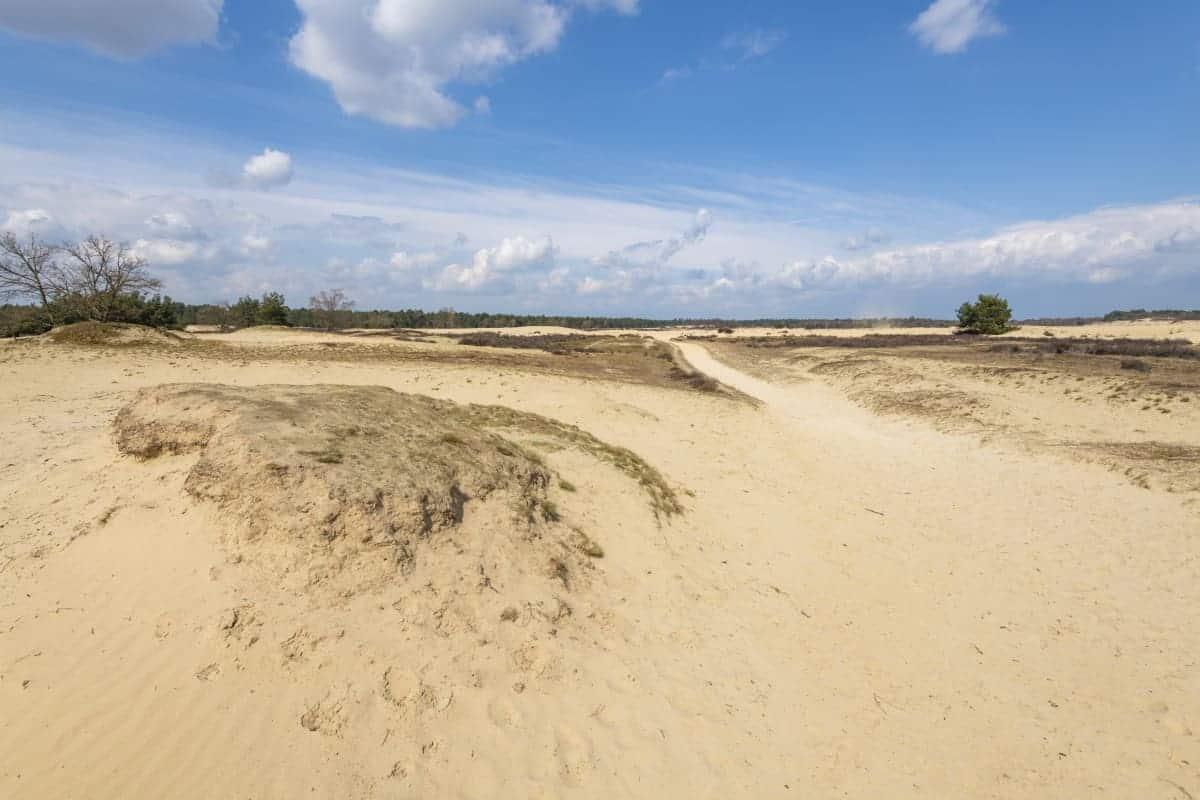 Loonse en Drunense Duinen Fotoweekend Brabant