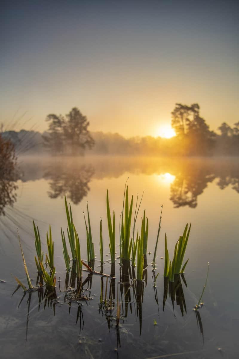 Van Eschenen bij zonsopkomst Fotoweekend Brabant