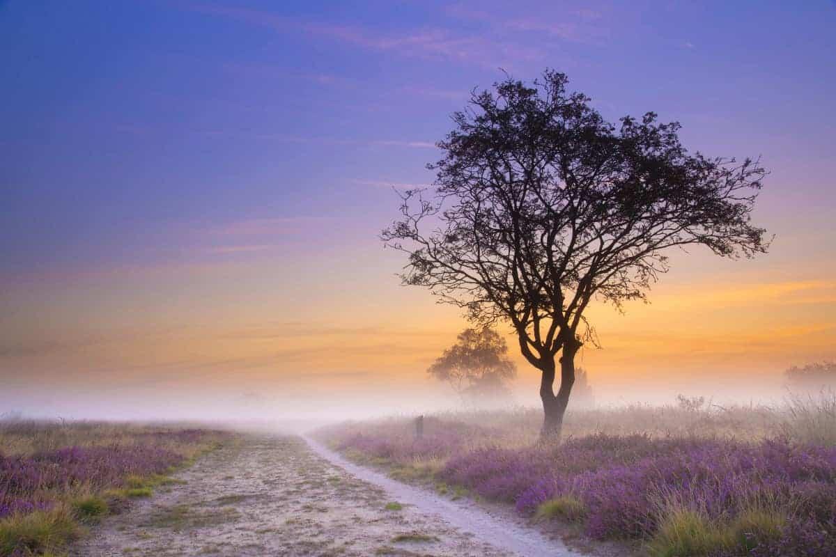Fotoweekend Drenthe Balloer veld Drenthe in de ochtendmist