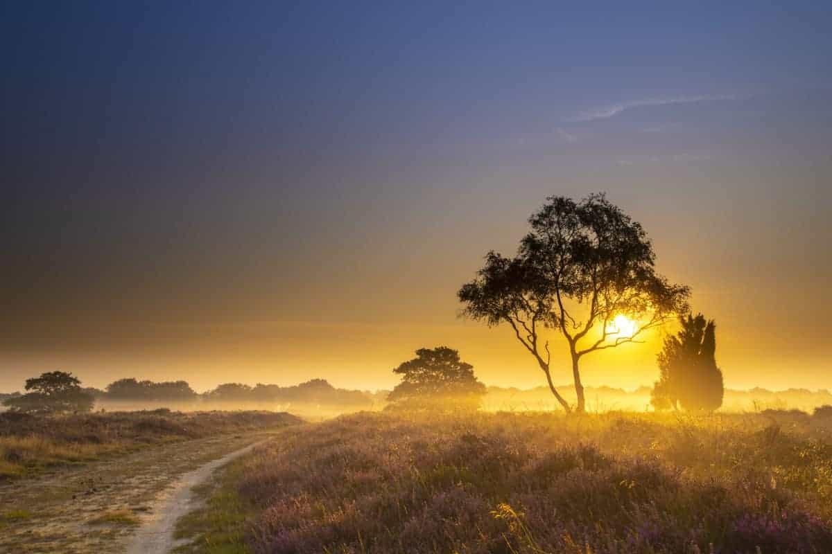 Fotoweekend Drenthe Balloerveld als de zon al op is