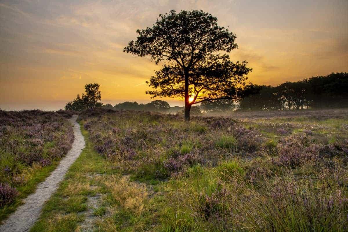 Fotoweekend Drenthe Gaasterse Duinen 2