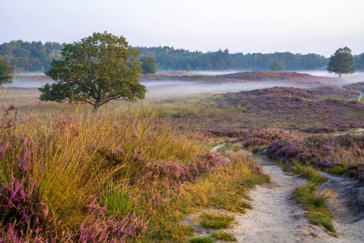 Fotoweekend Drenthe Gasterse Duinen zon op | Fotografie-reizen - Fotoreizen