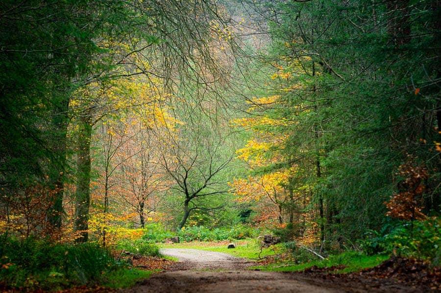 Fotoweekend Veluwe herfstbos