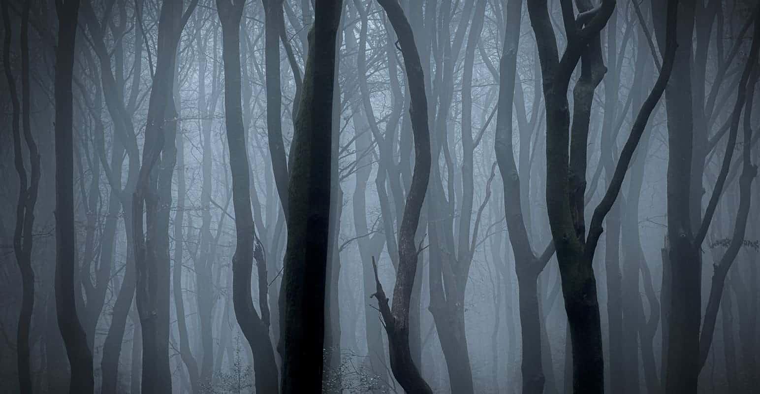 Fotoweekend Veluwe mist verkleind