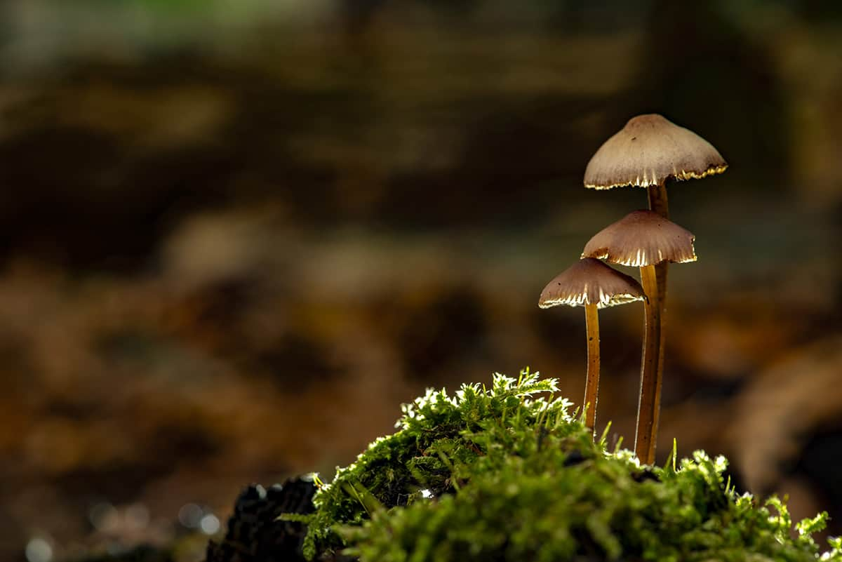 Fotoweekend Veluwe paddenstoelen