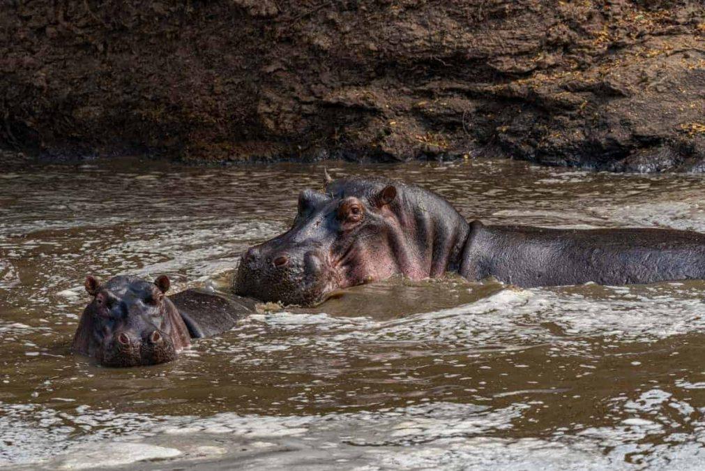 Jessica Blokland van Dien - nijlpaarden tijdens de fotosafari Kenia-Tanzania