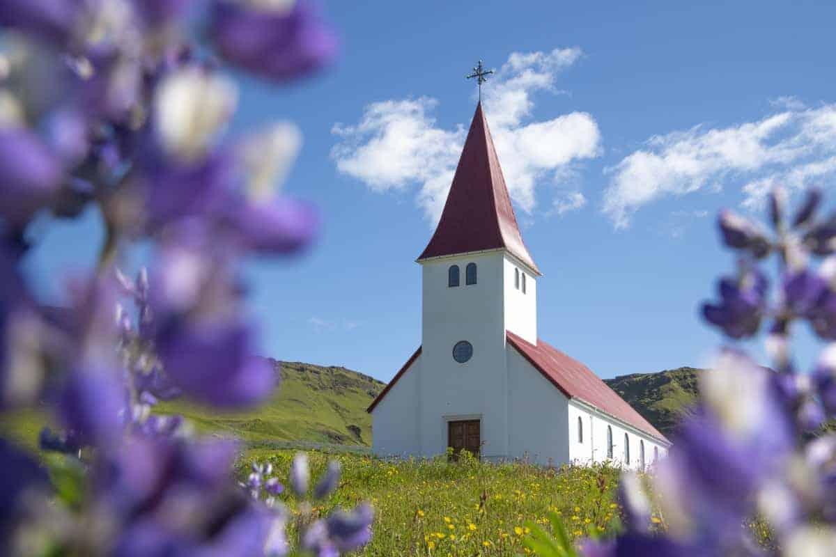 Kerkje Vik in de paarse Lupinen - Fotoreizen IJsland