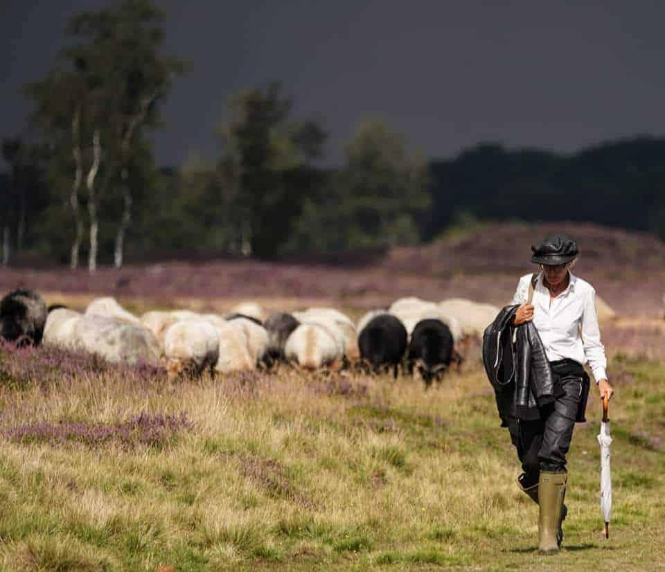 Marion van Schooten - de schaapherder op de Drentse heide