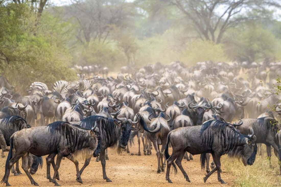 Rivercrossing Fotoreis Kenia Tanzania