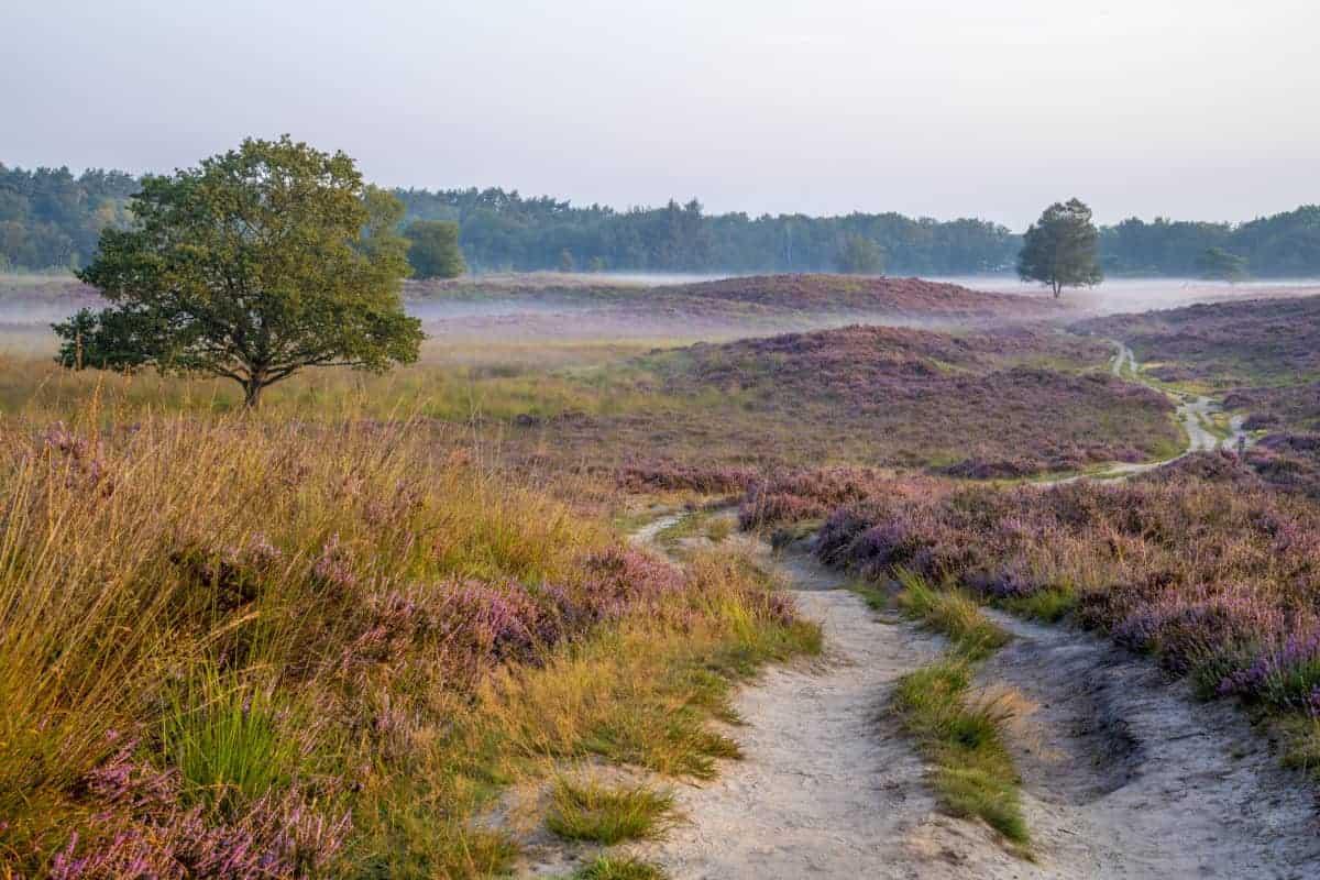 Workshop Landschapsfotografie Drenthe