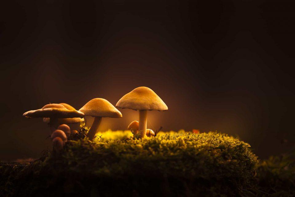 Hoe fotografeer je paddenstoelen?