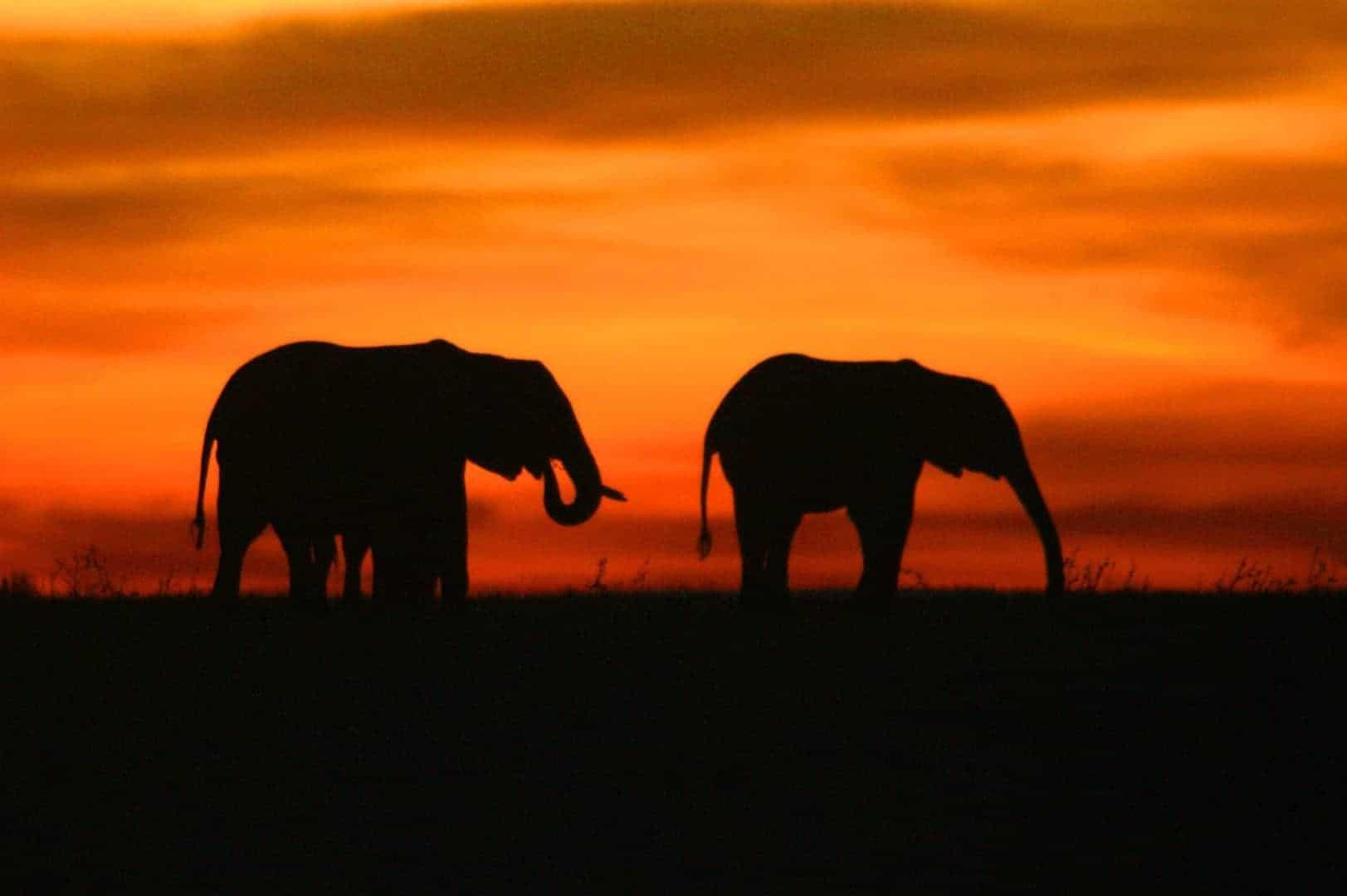 silhouetten van olifanten tijdens zonsondergang in Kenia